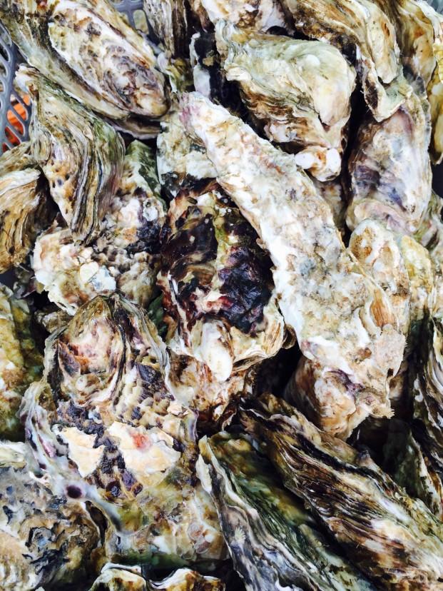 一番美味しい牡蠣の話