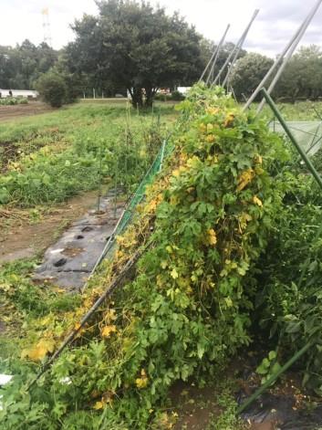 台風と野菜たちの話
