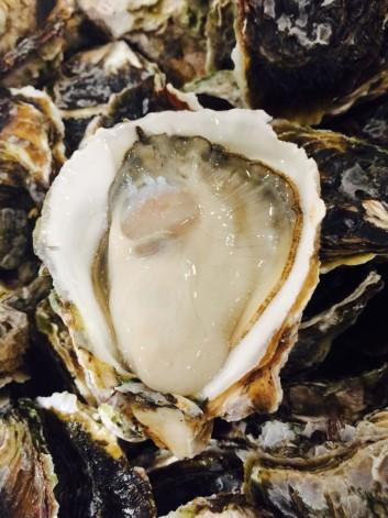 岩牡蠣の話