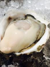 伊根 (岩牡蠣)