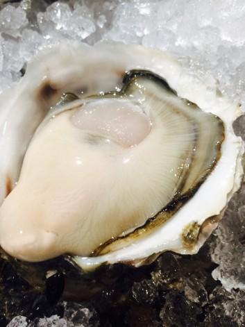 伊根湾の岩牡蠣の話