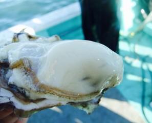 (Japanese) 仙鳳趾の牡蠣の話
