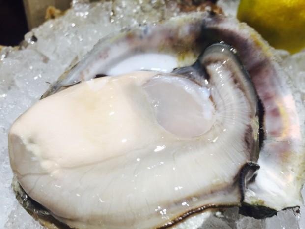小浜(岩牡蠣)